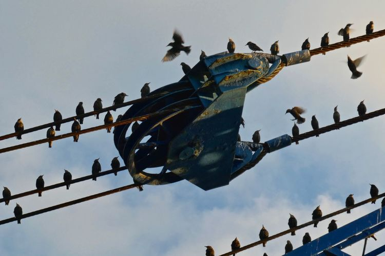 Low angle view of birds perching on metal against sky
