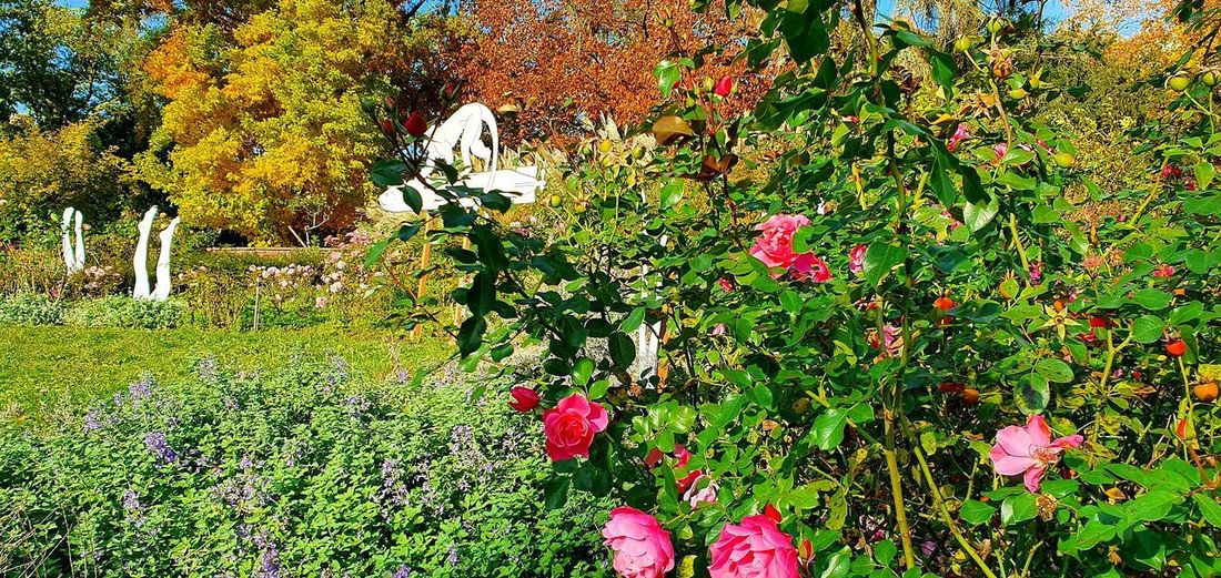 Pink flowering plants in park during autumn