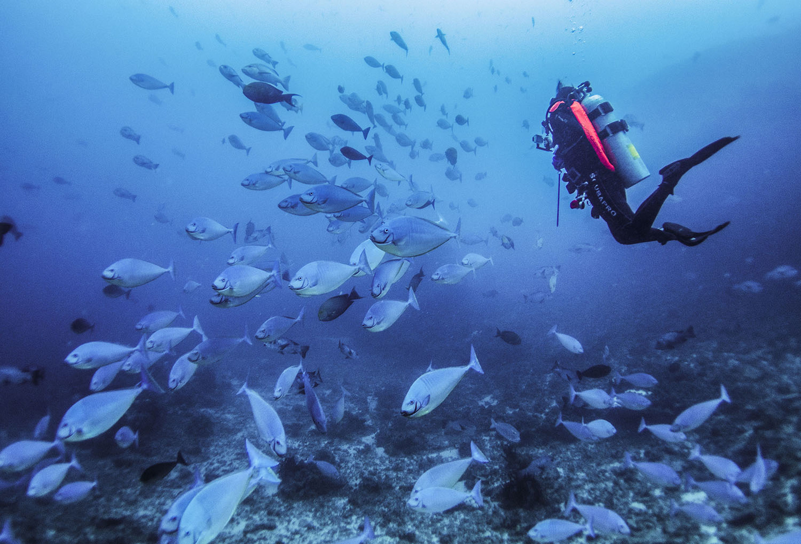 large group of animals, fish, real people, underwater, water, scuba diving, adventure, undersea, swimming, animal themes, one person, animals in the wild, nature, sea life, leisure activity, sea, day, beauty in nature, scuba diver, outdoors, people