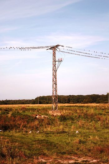 Electricity  Cable No People Grass Technology Business Finance And Industry Rural Scene Outdoors Day Nature Electricity Pylon Sky Bird Birds Communication Starling Bird Starlings Birds In Flight Birds On A Wire Summer Wire Large Group Of Animals Flock Of Birds Animal Themes Nature