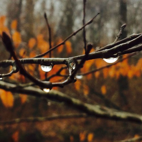 Raindrops Rainy Days No People Close-up Nature Branch Outdoors Day Beauty In Nature Tree