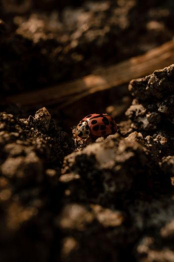 Close-up of ladybug on ground