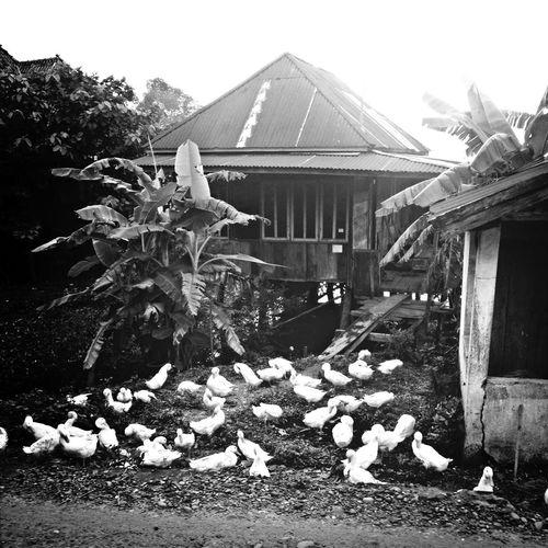 Frontofhouse Rumahpanggung
