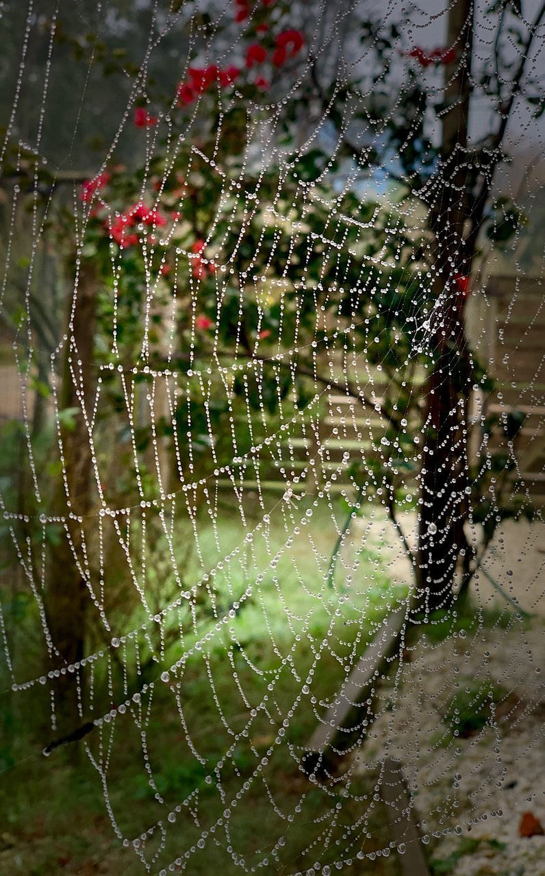 spider web, fragility, close-up, vulnerability, focus on foreground, nature, no people, natural pattern, day, complexity, animal themes, animal, beauty in nature, pattern, outdoors, drop, trapped, spider, water, web, dew