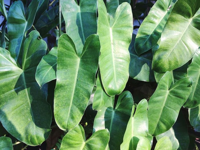 Plant Part Leaf Growth Green Color Plant Beauty In Nature Close-up Nature Day No People Sunlight Full Frame Outdoors Fragility Tranquility High Angle View Backgrounds Freshness Vulnerability