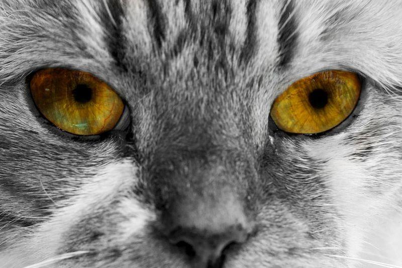 Naar het idee van Mark: my Cat with my Eyes Idea from @Clowd9 Fun Playing With Photoshop Unrealistic ArtWork Enjoying Life Hello World