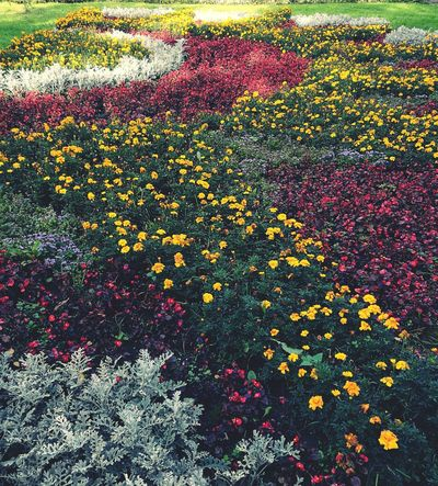 Garden Flower Multi Colored Freshness Growth Plant Beauty In Nature Yellow Blooming Colorful Variation Flower Head Formal Garden Pink Color Fragility Nature High Angle View Flowerbed Day Abundance Petal Yasenevo Moscow Moscowcity First Eyeem Photo Autumn Colors