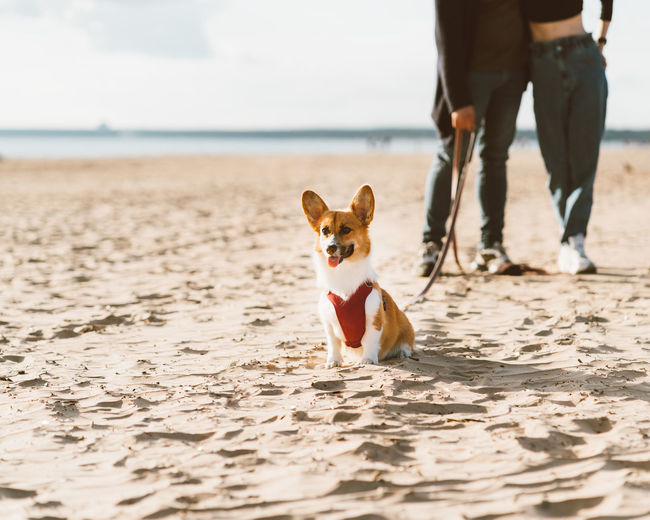 Cropped image of romantic couple walking in beach with dog. young woman and man are having fun