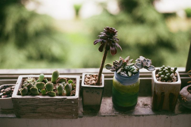 Plant Growth Nature Flower Freshness No People Flowering Plant Beauty In Nature Day Focus On Foreground Succulent Plant Cactus Container Close-up Vulnerability  Potted Plant Green Color Outdoors Fragility Sunlight