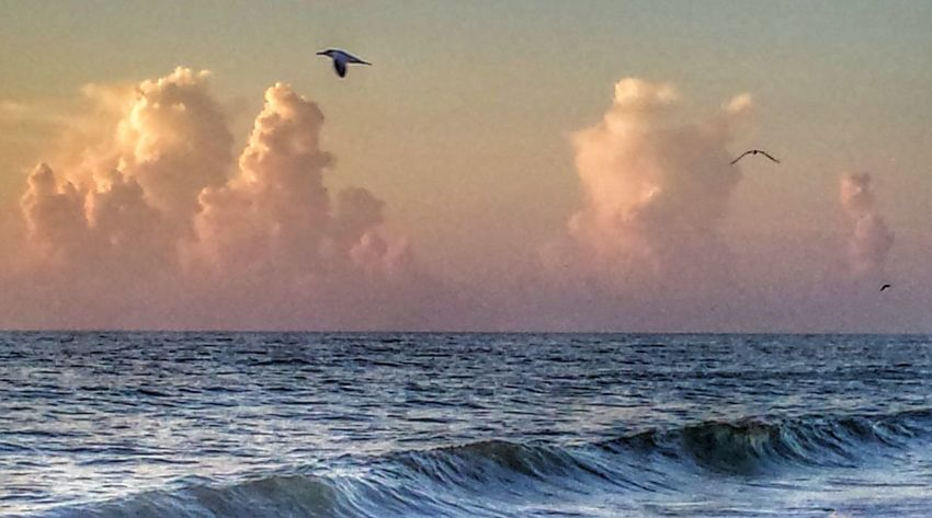 At The Beach This Morning Clouds And Sky Shore Birds Flying What A Way To Start The Day