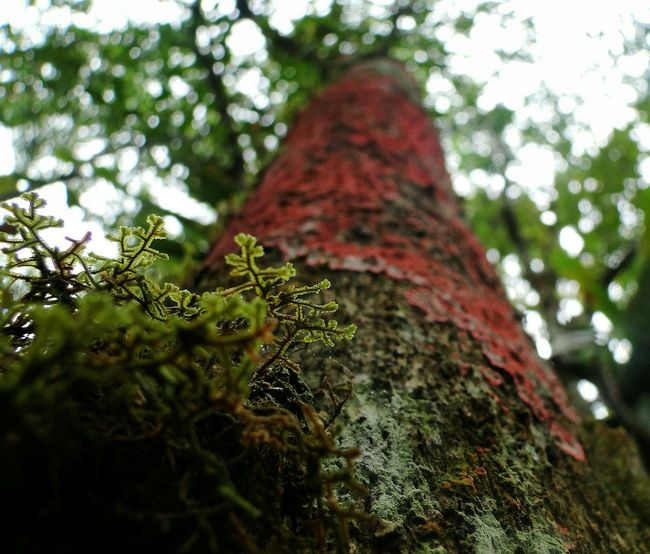 Tree Nature Growth Green Color No People Low Angle View Leaf Close-up Beauty In Nature Textured  Day Branch Outdoors Sky Nature Beauty In Nature Liquen Moss