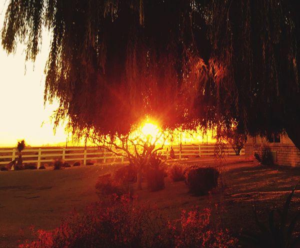 Sun Sunset Sunset Silhouettes Sunset #sun #clouds #skylovers #sky #nature #beautifulinnature #naturalbeauty #photography #landscape Trees