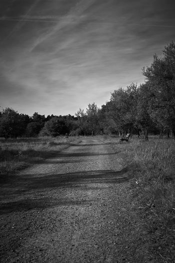 the way Way Sky And Clouds Tranquility Tranquil Scene Landscape Melancholic Landscapes Melancholy Scenics Sadness Rural Scene Walk Lucky's Monochrome Lucky's Mood Lucky's Memories Monochrome Monoart Black And White Blackandwhite Photography Mood Tree Light And Shadow Shadow Fall Outdoors Sky Nature