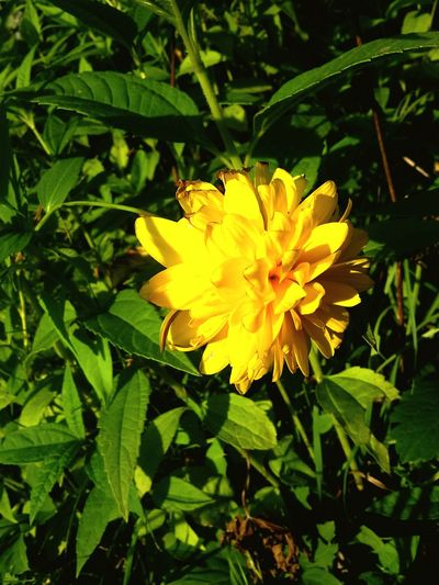 Flower Yellow Nature Flower Head Plant Beauty In Nature Eye4photography