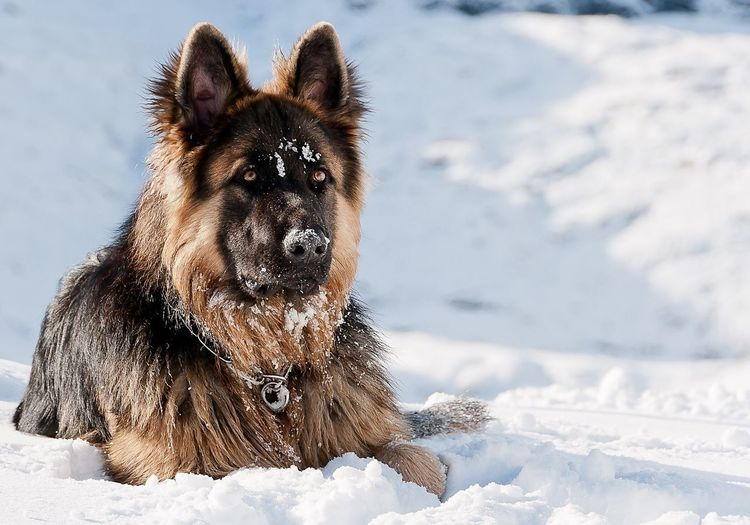 Close-up of a dog on snow covered field