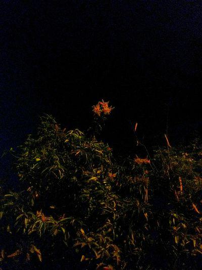 Night Nature No