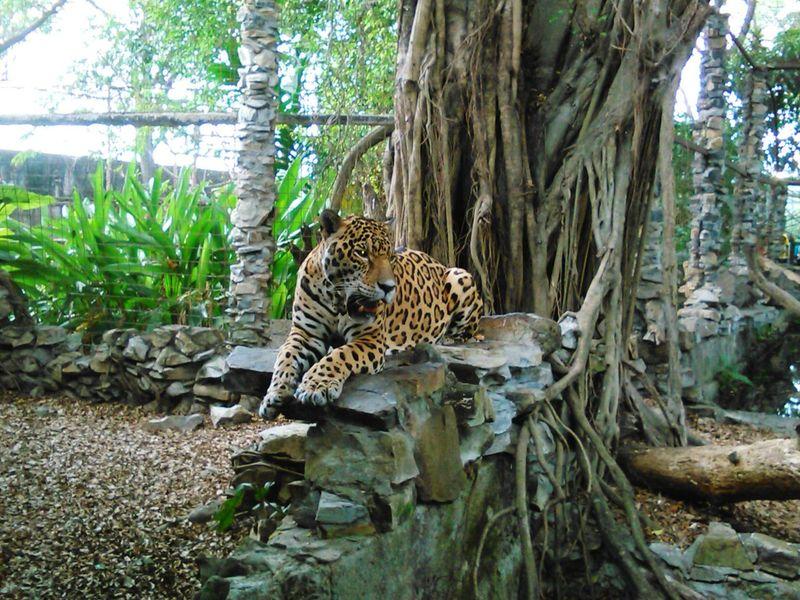 Zoo Bigcats GoodJob NOcircusAnimals