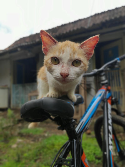 Portrait of cat on bicycle