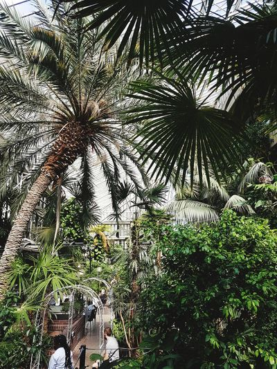 barbican conservatory, London Leaves Plants Conservatory Green Color Greenhouse Tree Palm Tree Backgrounds Sky Plant Life Botany Palm Frond Growing Blooming
