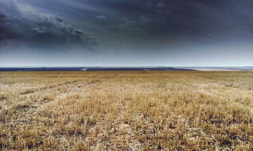 Field Nature Rain