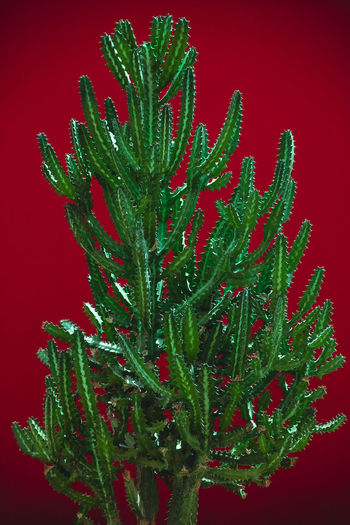 Close-up of wet plant against red background