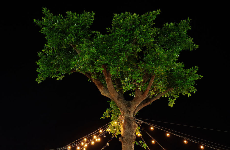 Tree and light in festival : Plant Night Tree Nature No People Illuminated Growth Outdoors Transportation Motion Beauty In Nature Long Exposure Road Green Color Sky Branch Tranquility Land Trunk Festival
