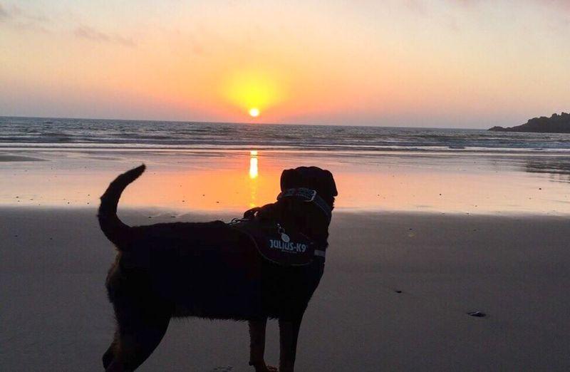 Cute Dog  Cute Pets RottWeilers Cornwall Uk Dogoftheday Dogs Of EyeEm Girlandherdog Rottweilergirls Rottweilerlove Dogs Rottweileroftheday Rottweilerlife RottweilersofeyeEm Bestfriend Beautiful Girl Cornwall Rottweiler Beachwalk Beachlife Dogbeach Walk Beach Cornwall Beach Sunrise Sunrise_sunsets_aroundworld