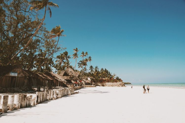 The stunning Uroa Beach, Zanzibar Uroa Beach Zanzibar Beach Photography Beach Tanzania Travel Destinations Travel Photography Tree Clear Sky Sea Beach Blue Sunny Sand Sky Landscape