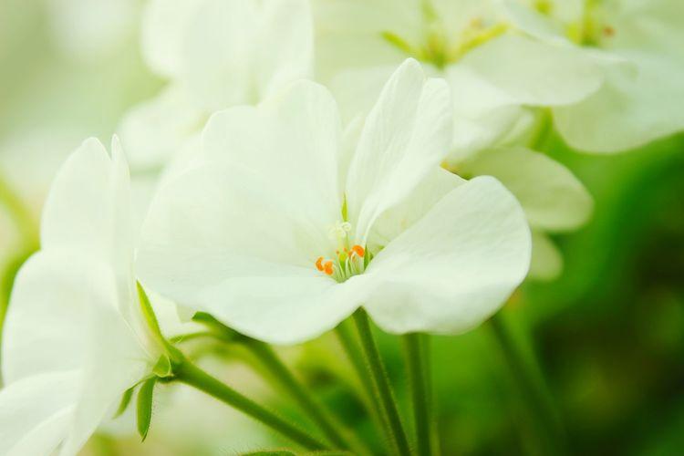 P.u.r.e Gardensbythebay Singapore Flower Porn White Flower