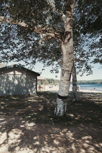 Trees on beach by building against sky
