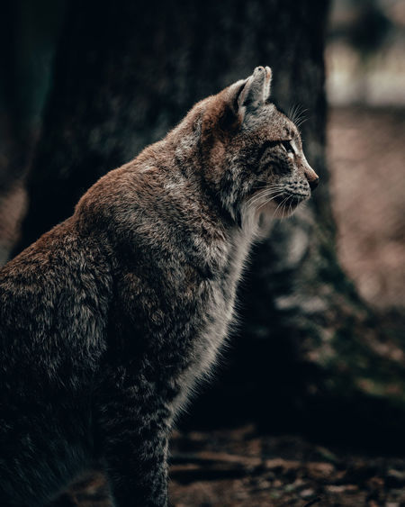 Mammal Animal