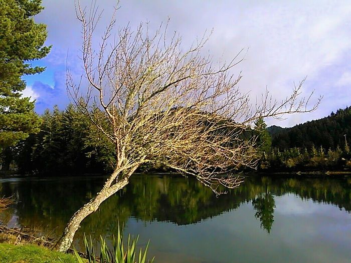 Leaning in Hanging on Siuslaw River Tree River Bank  Early Spring Reflection Reflection Lake