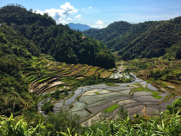 Banaue rice terraces, Philippines Plant Scenics - Nature Tree Mountain Growth Tranquility Green Color Landscape Tranquil Scene Agriculture No People Terrace Rural Scene Land Field Environment Nature Day