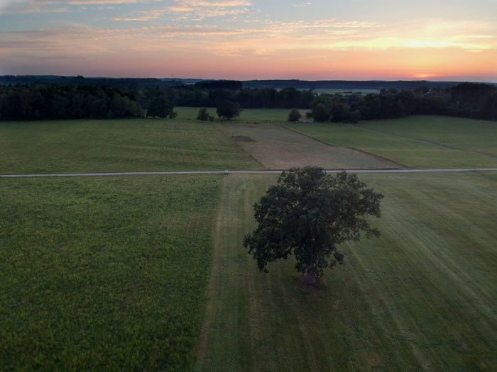 Agriculture Beauty In Nature Cloud - Sky Dji Spark Environment Field Growth Idyllic Land Landscape Nature No People Outdoors Plant Plantation Rural Scene Scenics - Nature Sky Sunset Tranquil Scene Tranquility Tree
