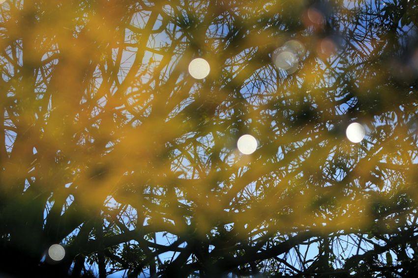 植物公園なのに…‥誰も見ることがないであろう風景♪(*´艸`) Water Reflection Of Trees Water Reflection Talking Pictures Tree Silhouettes Tree Silhouette Tree Porn Tree Hanging Out EyeEm Gallery Hello World Japan Photos Japan Photography EyeEm The Best Shots Eyeemphotography Taking Pictures Hi! シルエット部 Reflection_collection Water Reflections Taking Photos Water_collection Water Reflection Water Reflections EyeEm Best Shots - Reflections Reflections Reflection 玉ボケ部