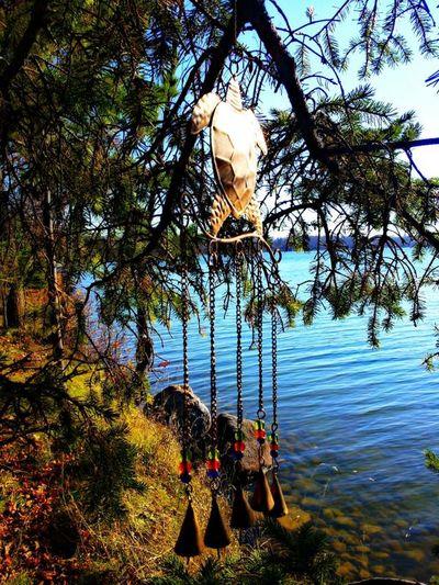 Roy Lake MN Turtle Wind Chime Relaxing I ♥ Turtles  EyeEm Best Shots - Nature Windchimes