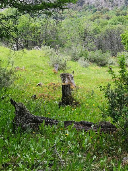 Patagonia Argentina National Park Grass Idyllic Cut Tree Parque Nacional Tierra Del Fuego Tree Trunk Nature No People Outdoors Day Grass Beauty In Nature Tree Green Color Tranquility Forest