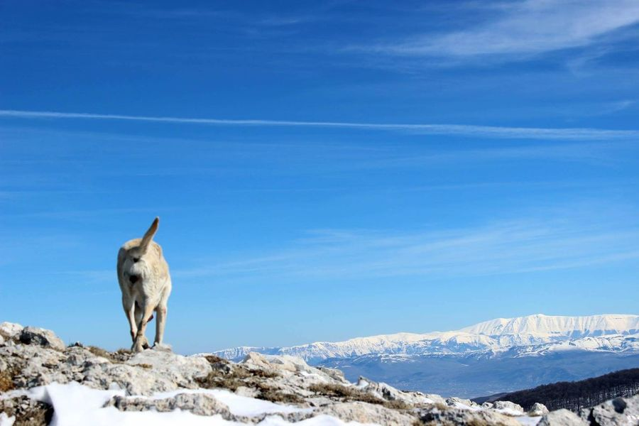 One Animal Snow Cold Temperature Animal Themes Mammal Winter Sky Nature No People Animals In The Wild Domestic Animals Outdoors Day Beauty In Nature Mountain Dog❤ Dogs Of EyeEm Pet Photography