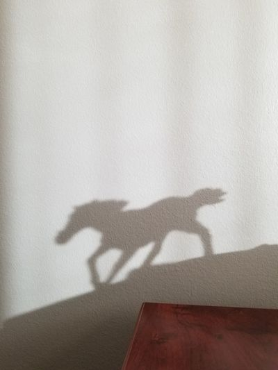 Shadow of horse
