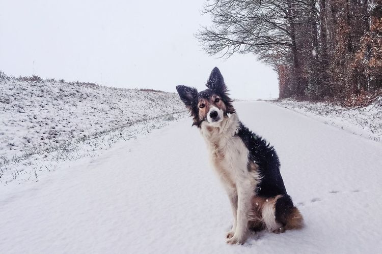 Portrait of dog sitting on snow covered road