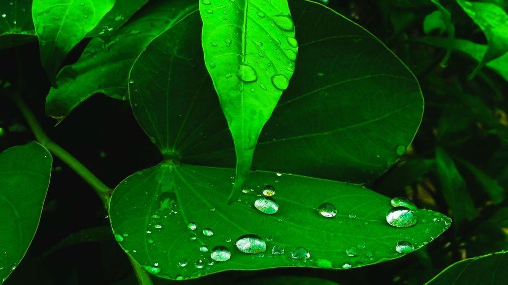 Green Color Leaf Nature Water Freshness