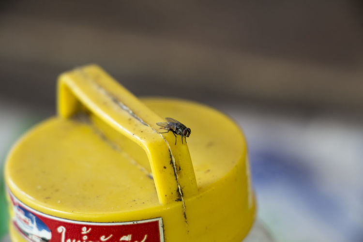 Close-up of housefly on yellow container