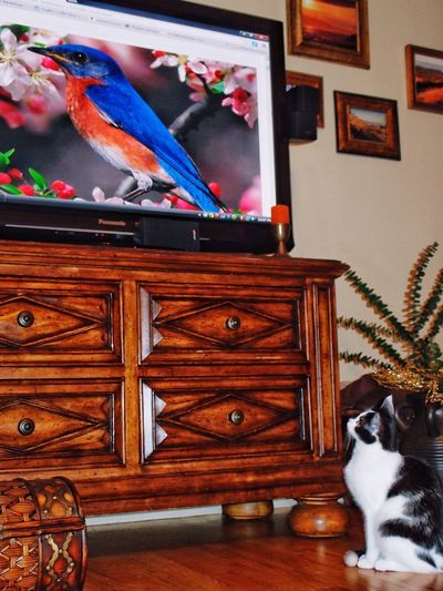 Cat Watching TV Animal Themes Indoors  Domestic Animals Home Interior One Animal Mammal No People Home Showcase Interior Cabinet Day Bedroom