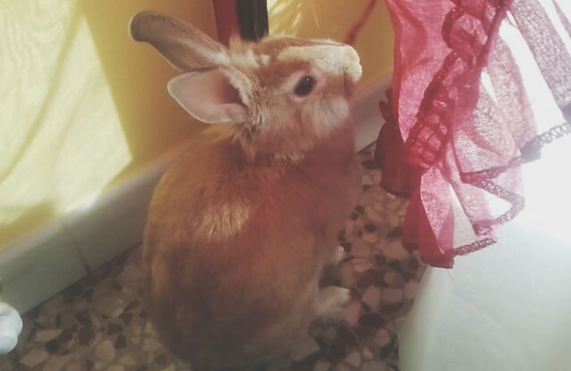 Rabbits Love It Mybiglove Foreverwithyou First Eyeem Photo