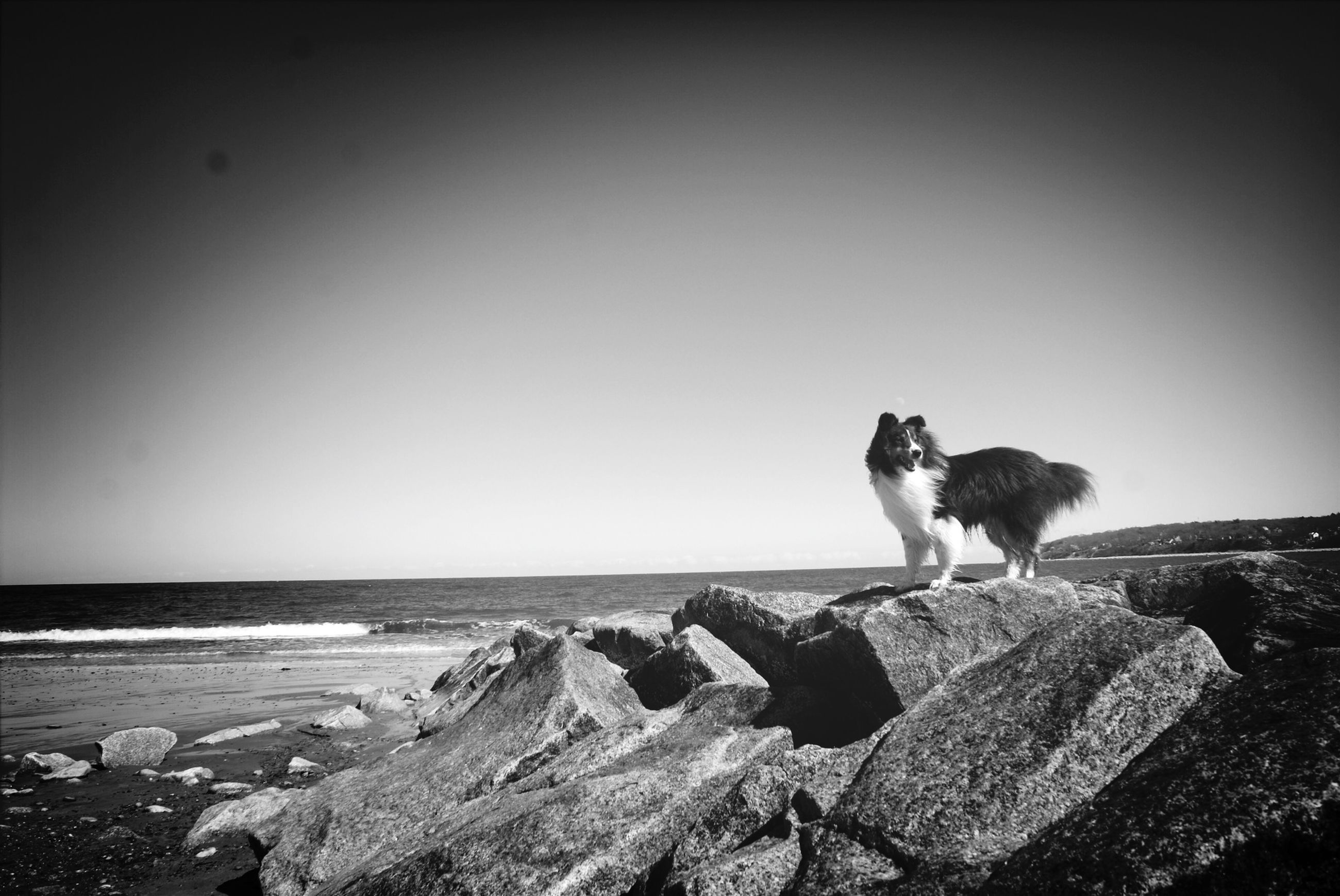 one animal, dog, pets, animal themes, domestic animals, clear sky, copy space, mammal, sea, full length, horizon over water, water, sitting, standing, rock - object, beach, rear view, shore, nature, tranquility