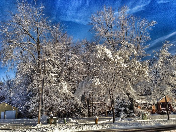 Tree Plant Snow Cold Temperature Winter Sky Nature Snowing Beauty In Nature No People Sunlight Day Frozen Land Built Structure Tranquility Outdoors