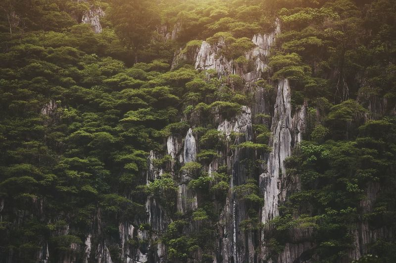 Trees grow on rock cliffs Backgrounds Beauty In Nature Light Light And Shadows EyeEmNewHere Tree Forest Close-up