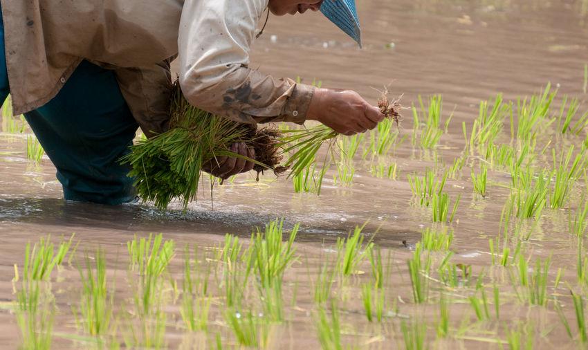Day Farmer