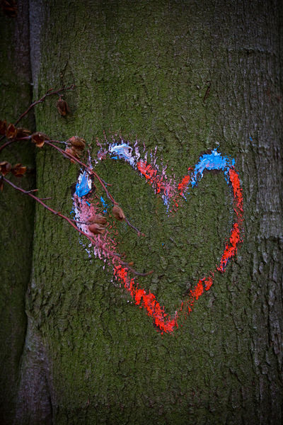 Positive Emotion Love Heart Shape Tree Trunk Trunk Plant Emotion Tree No People Nature Close-up Creativity Outdoors Day Green Color Valentine's Day - Holiday Art And Craft Textured  In Love ♡  Red Color Blue Color Bark Of A Tree Symbol Heart ❤ Heart