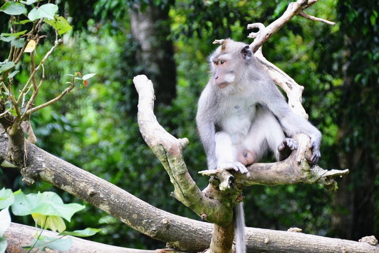 Low angle view of monkey sitting on branch against trees